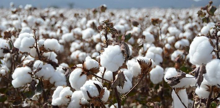 Why Organic Cotton is Important